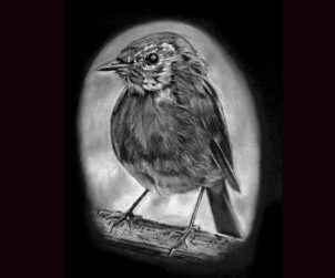 Robin Robin by Liz Lane, drawing by Caz Chandler